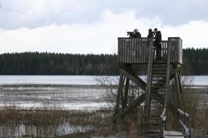 joutsenet-059a