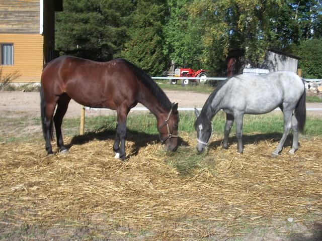 Lyytikkälän hevoset