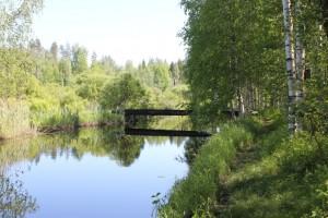Patikkapolkua Alajoen varressa Tuhkakankaan laavun luona