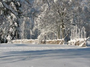 Riukuaita suuren lumimyräkän jälkeen marraskuussa 2006