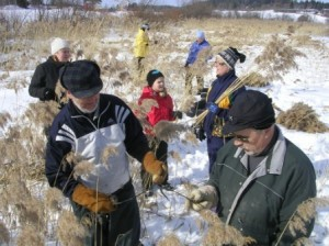 Aikaisemmin, kevättalvella 2006 oli aloitettu ruo'on keräminen Telkjärven jäältä